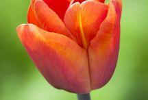 Spring 2015 Bulbs