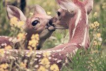 Beautiful Wildlife / Beautiful photography of wildlife and nature!