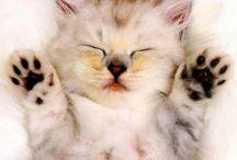 Gatos / meus amores