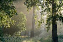 Erdők/Fák