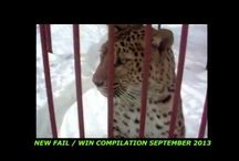 Funny Fail Compilations / Funny Fail Compilations just for you