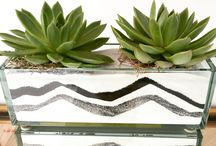 Urban Spikes - Succulent Design / Contemporary succulent, cacti and botanical arrangements . No water required, just love.  orders@urbanspikes.com
