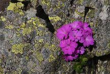 Unieke Flora in de Orobische Alpen
