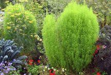 Sommarblommor - bladväxter