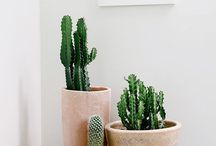 Indoor plants / Indoor plant styling and ideas.