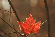 Fall- otoño - hojas