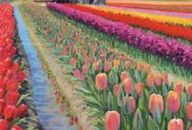 Skagit Valley Tulip Festival / by Oz Dust Designs