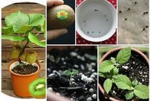 How To Grow Fruit From Scraps