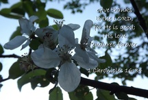 Inspirational Photos / Photos of beauty with scripture