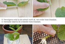 Stekken en vermeerderen van planten