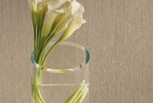 Wallcoverings / Get wallcovering design ideas from the brands you'll find at Paper Doll Interiors.