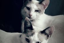 Mis mascotas / mis gatas y perras hermosas