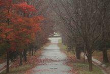 Autumn (Sonbahar)