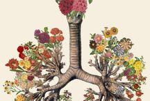Anatomia colorida