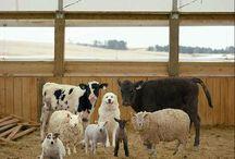 Life in Farm.......