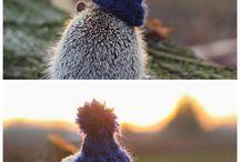 hedgehog   etc
