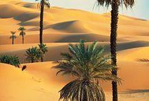 Desertos,Oasis  e seu povo