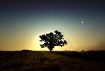 I love trees / by Rebekah Orrico