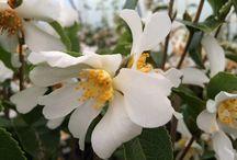 Botanical Delights