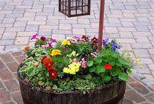 plantas y jardinería