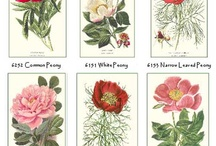 Botanicals / by Patricia Zippi