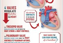 Circulatory system/cardiology