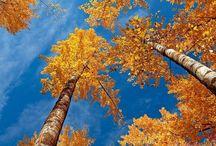 { Autumn Glory }