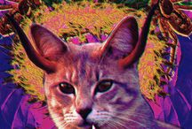 Psychedelic Cats / My work for Psychodelic Colours shop on Etsy showing psychedelic cats from otherworldly animal kingdom.