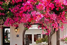Bougainvillea / This summer, we are creating a home textiles collection which are inspired by the shades of the bougainvillea adorning the streets!