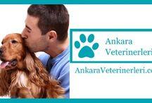 AnkaraVeterinerleri.com / Ankara'nın veteriner klinikleri rehberi. www.AnkaraVeterinerleri.com