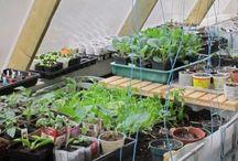 Growing Beds