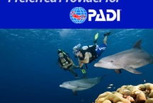 Scuba / Diving, scuba, padi and all of the wonders of the sea!  Breathing Air Testing by the Industry Leader.  Trace Analytics has been the preferred PADI Americas provider for air testing since 1995.