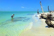 Cayo Costa, Florida / Find the secluded beach you've always dreamed of... Cayo Costa!