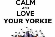 keep calm and love your yorkie