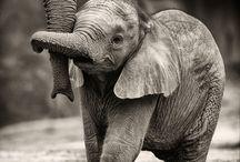 bebé elefante con mami