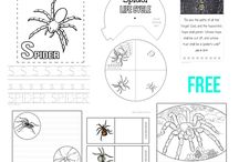 homeschool spider study