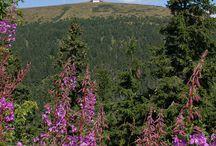 Jeseníky / Jedinečné a kouzelné hory a podhůří okolo nejvyšší hory Moravy Pradědu.
