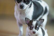 So Doggone Cute