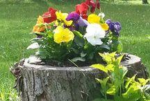 blomster i stubber