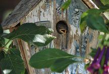 MADAMMENS FUGLE & DYR / Sjove, nyttige & hyggelige fugle- & fodre huse til haven.