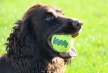 Dog toys in action / The toys we sell that our dogs REALLY love