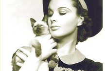 Celebrities with their Siamese Cats