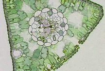 Microscopic / by fatma alashmawi