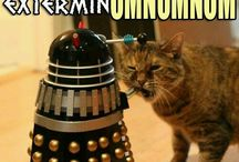 <3<3<3<3<3cats(other than grumpy cat)<3<3<3<3 / please keep language clean and pictures clean=) / by Esther Bonanza