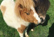 Playful Ponies / 0