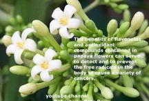 !10 health benefits Papaya  Flower!