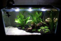 Aquascaping/Tanks