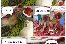 Meerschweinchen comic