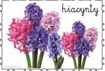 kwiaty (nazwy)
