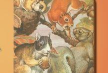 Zoology / by Angela Rae Hoppel